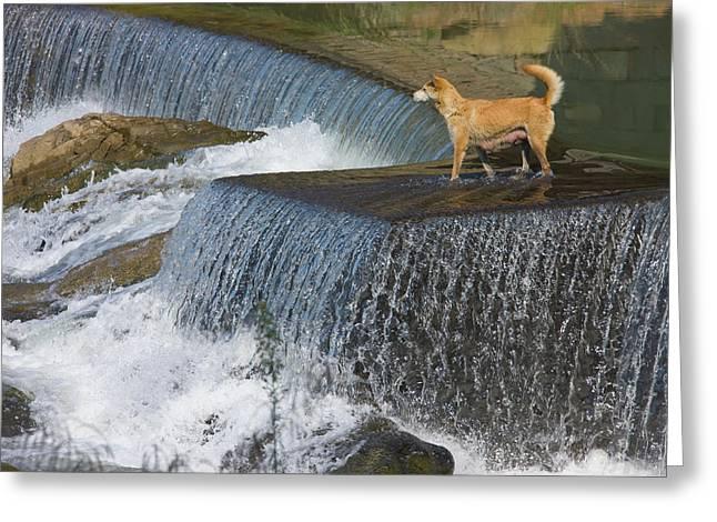 Dog On The Waterfall, Pingnan, Fujian Greeting Card