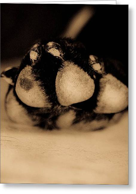 Dog Paw Greeting Card by Jamie Bishop