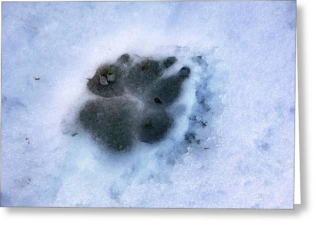 Dog Paw Print In The Snow Greeting Card by Cordelia Molloy