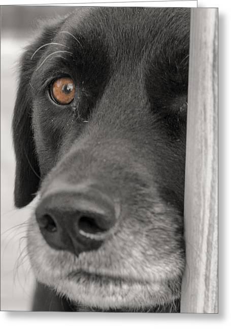 Dog Peek A Boo Greeting Card