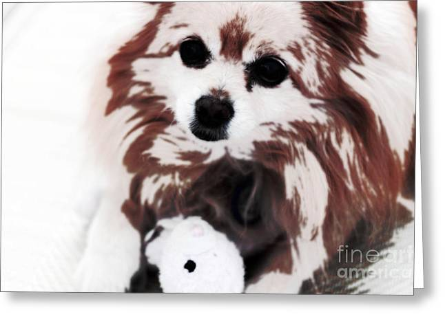 Dog Playing With Toy Greeting Card