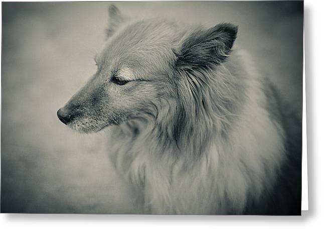 Lonely Dog Greeting Card by Pro Shutterblade