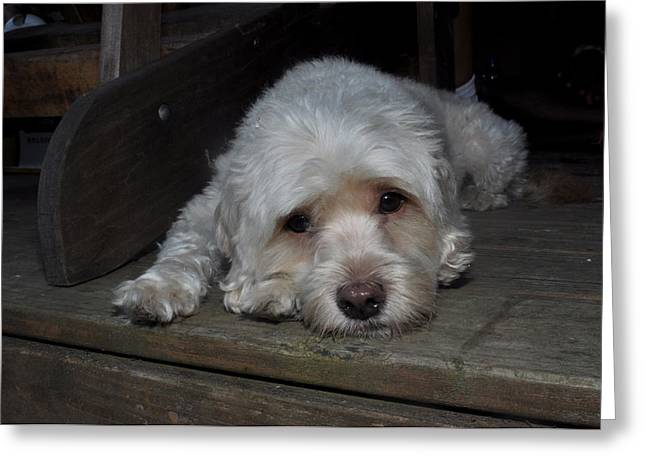 Dog Resting On Porch Greeting Card
