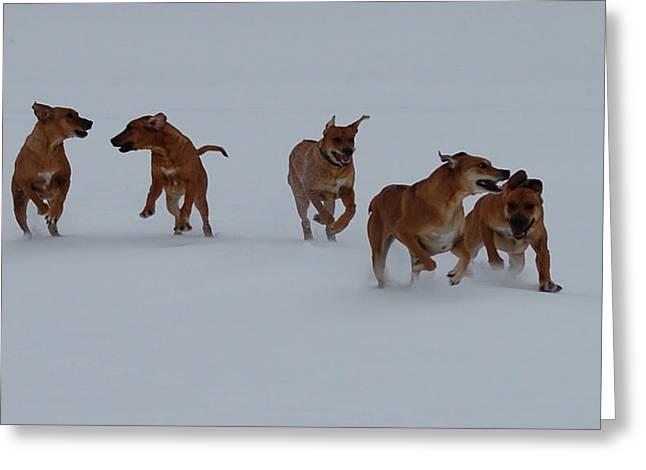 Dog Run Greeting Card by Mim White