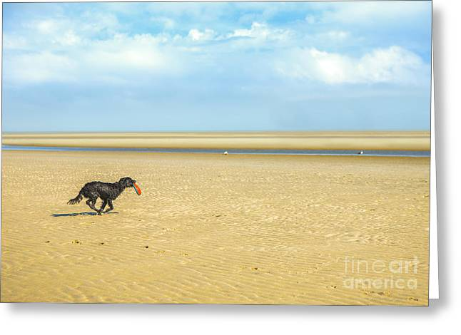 Dog Running On A Beach Greeting Card by Diane Diederich