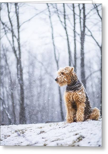 Dog Sits Under The Snowfall Greeting Card