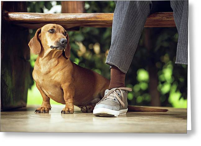 Dog Sitting On Floor Under Table Greeting Card by Ktsdesign