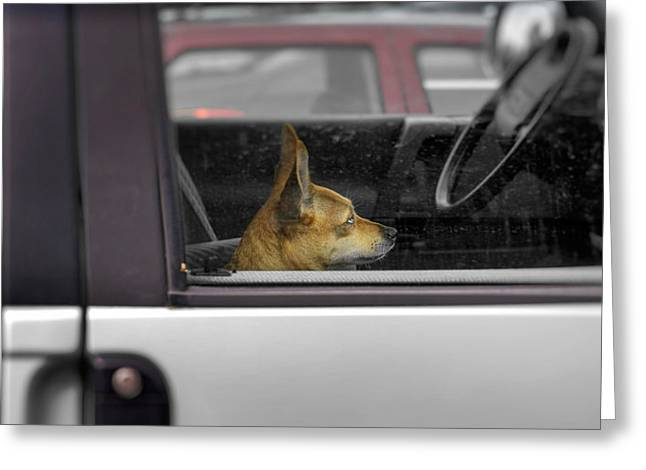 Dog Sitting On Passenger Seat In A Car Greeting Card by Panoramic Images