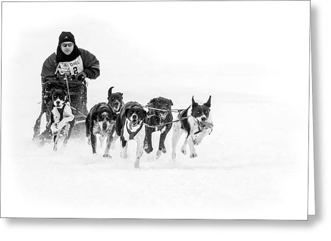 Dog Sled Team Greeting Card