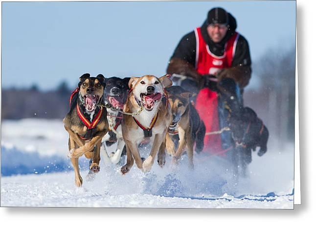 Dog Sledding Race Greeting Card