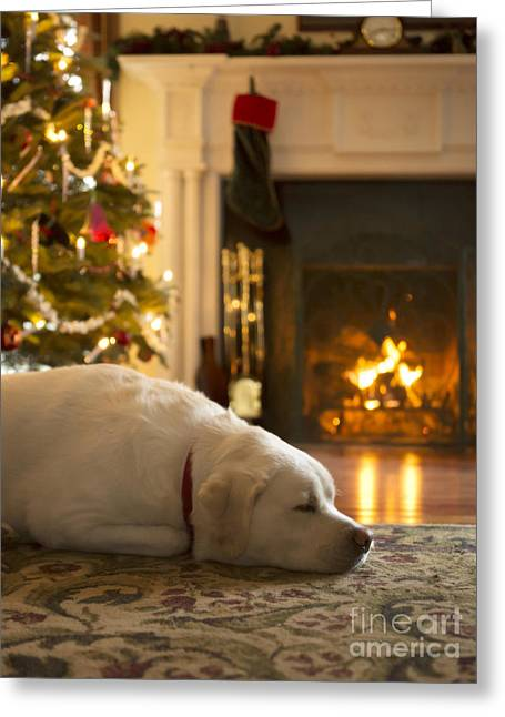 Dog Sleeping By The Christmas Tree Greeting Card by Diane Diederich