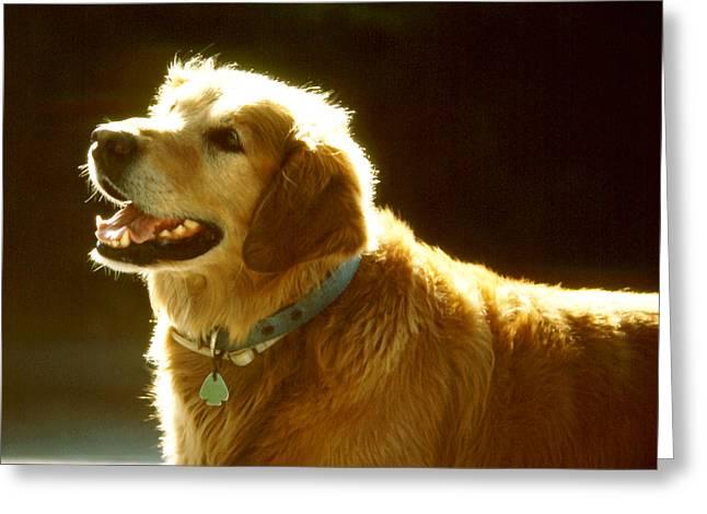 Dog Smile Greeting Card by Robert  Rodvik