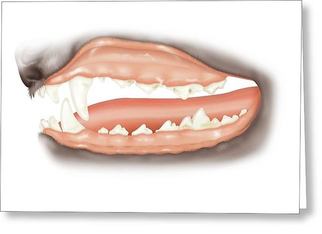 Dog Teeth Plaque Greeting Card
