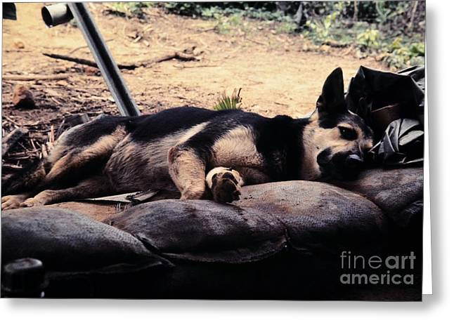 Dog Tired Greeting Card by Mel Steinhauer