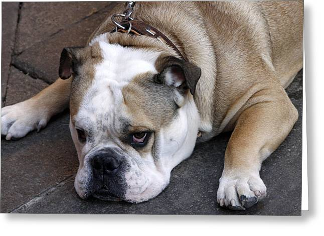 Greeting Card featuring the photograph Dog. Tired. by Rick Locke