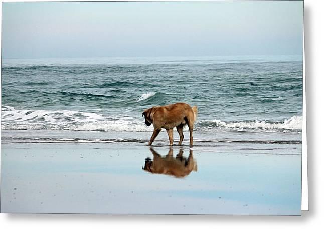 Dog Walking Greeting Card by Cynthia Guinn