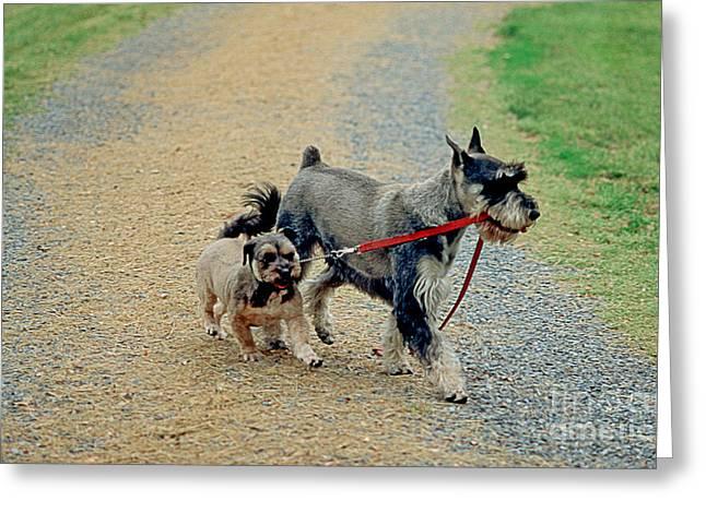 Dog Walks Dog Greeting Card