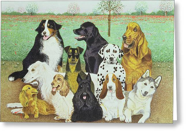 Dog Watch Greeting Card by Pat Scott