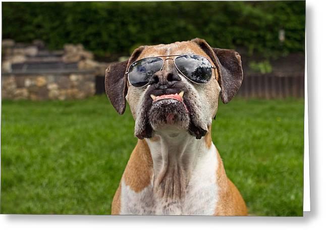 Dog Wearing Sunglass Greeting Card