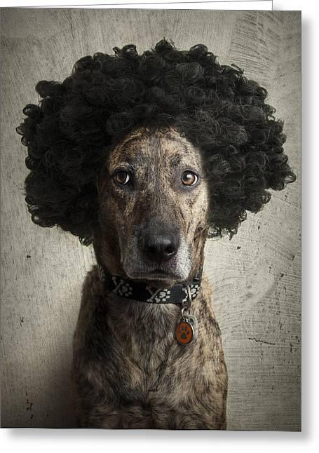 Dog With A Crazy Hairdo Greeting Card by Chad Latta