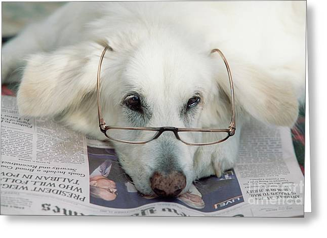 Dog And The News Greeting Card by Yva Momatiuk John Eastcott