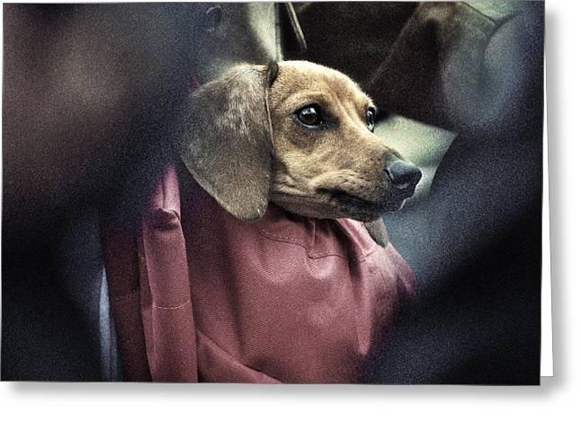Doggie's Bag Greeting Card by Michel Verhoef