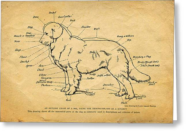 Doggy Diagram Greeting Card by Tom Mc Nemar