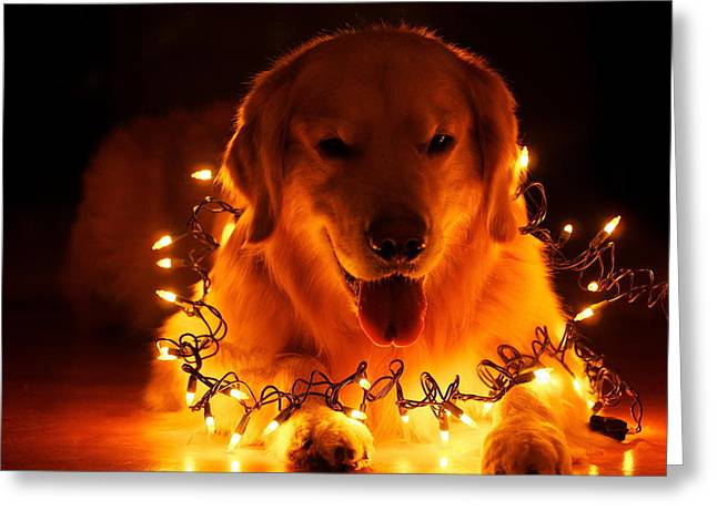 Doggy Wrapped In Christmas Lights Greeting Card by Doc Braham