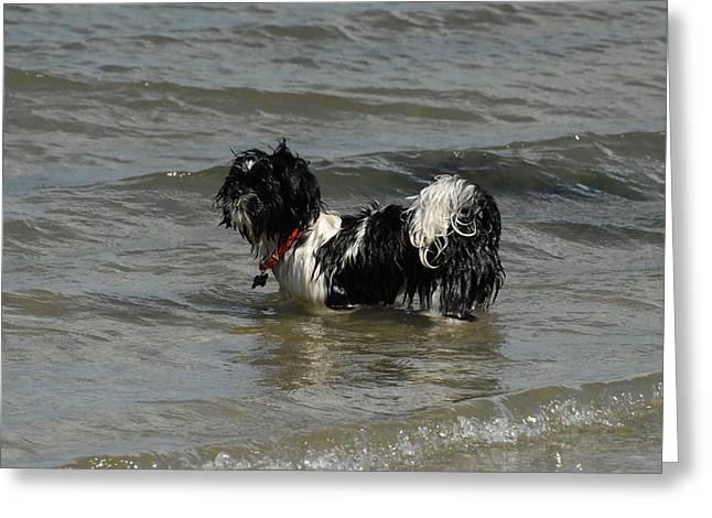 Dogs 141 Greeting Card by Joyce StJames