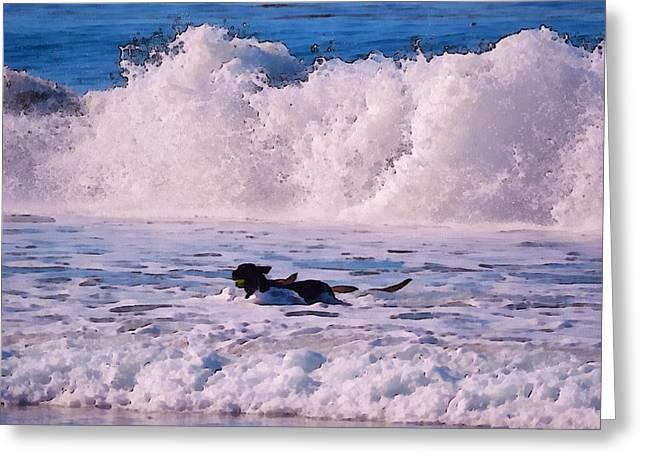 Dogs At Carmel California Beach Greeting Card by Barbara Snyder