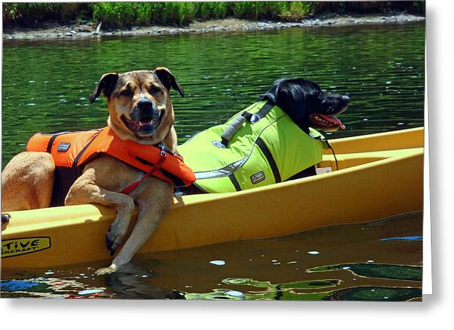 Dogs In A Kayak Greeting Card