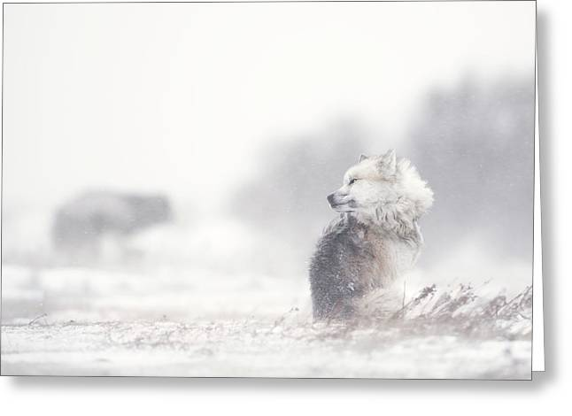Dogs In The Storm Greeting Card