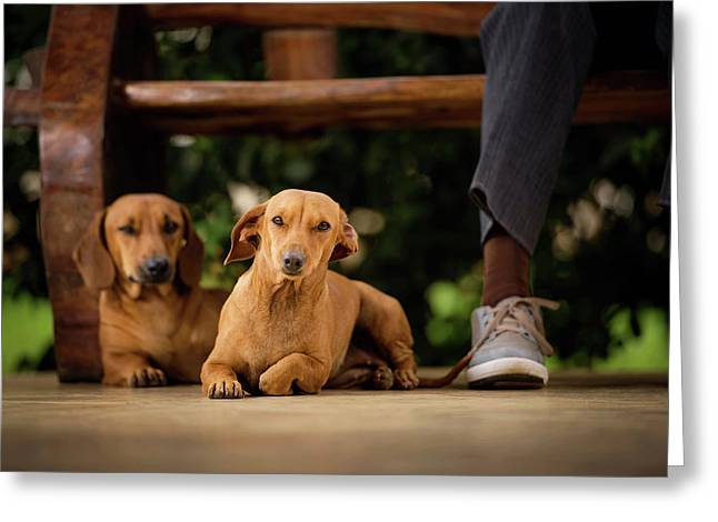 Dogs Lying On Floor Under Table Greeting Card