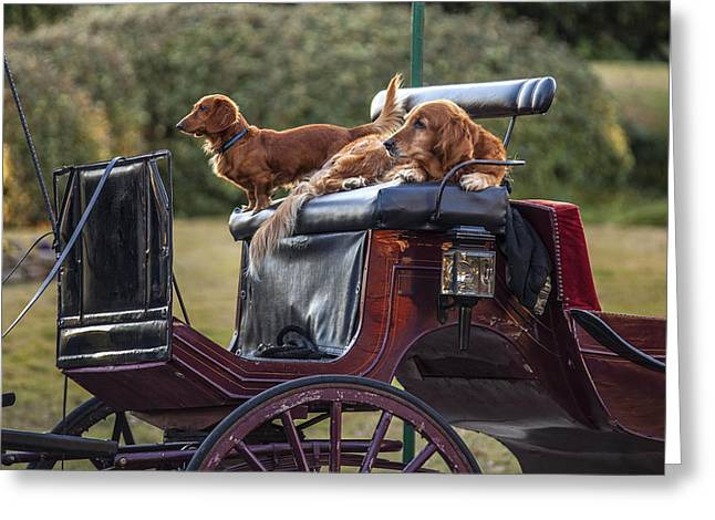 Dogs Of The Carriage Greeting Card