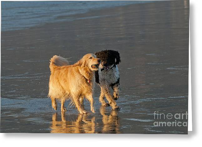 Dogs Playing On Ocean Beach Greeting Card