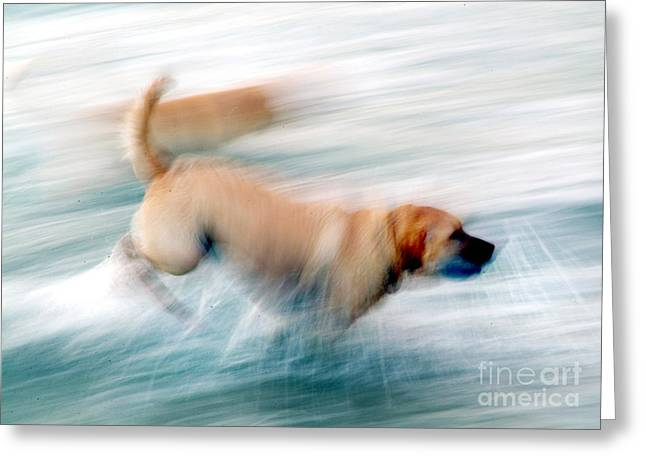 Dogs Running In Sea. Greeting Card