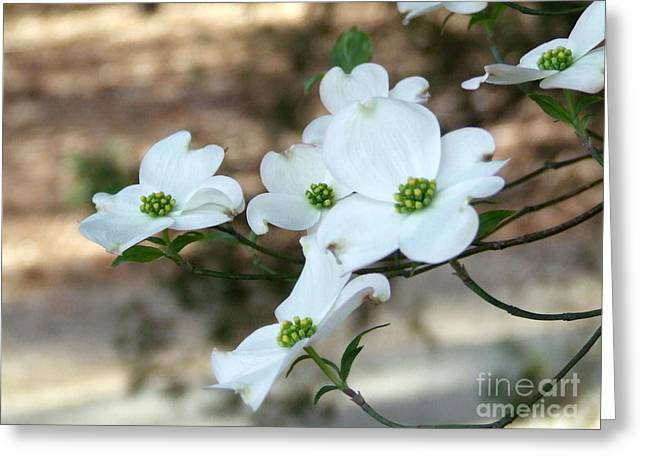 Dogwood 2 Greeting Card