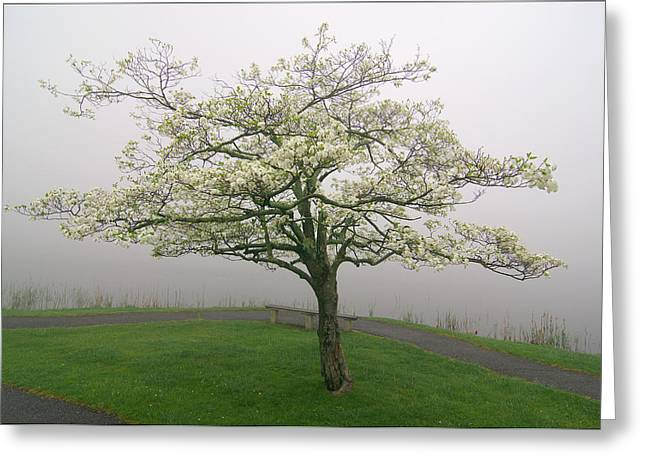 Dogwood And Fog With Bench - Abbott Lake - Peaks Of Otter Greeting Card