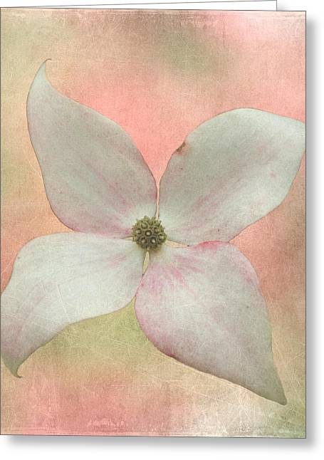 Dogwood Blossom Greeting Card by Angie Vogel
