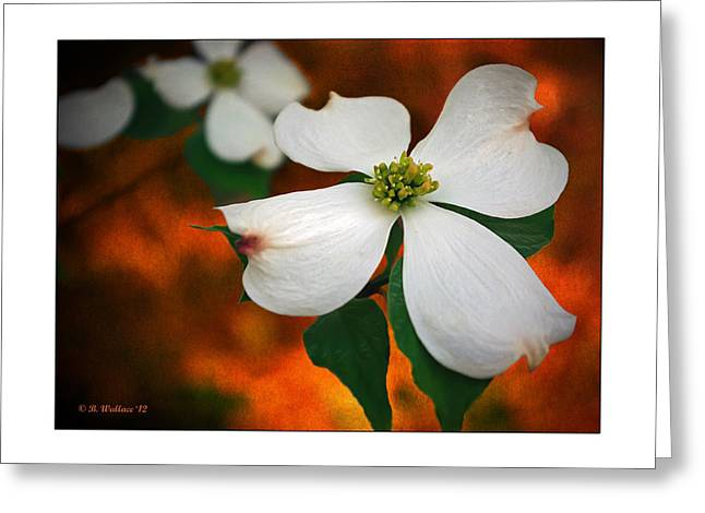 Dogwood Blossom Greeting Card by Brian Wallace