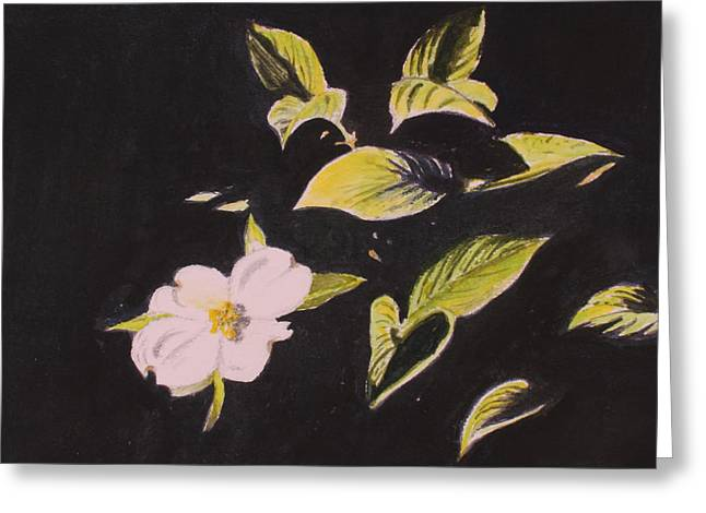 Dogwood Blossom Greeting Card by Donna Oshea