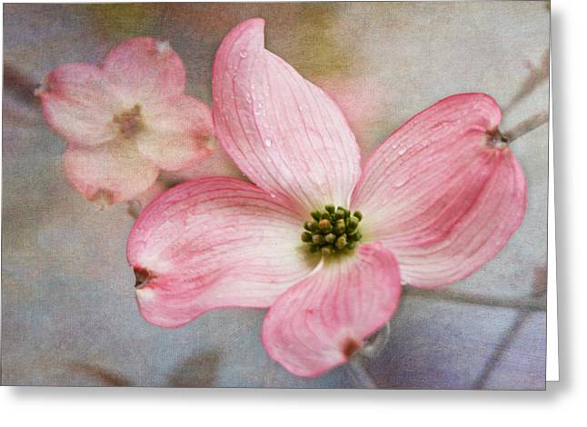 Dogwood Blossoms Greeting Card by Angie Vogel