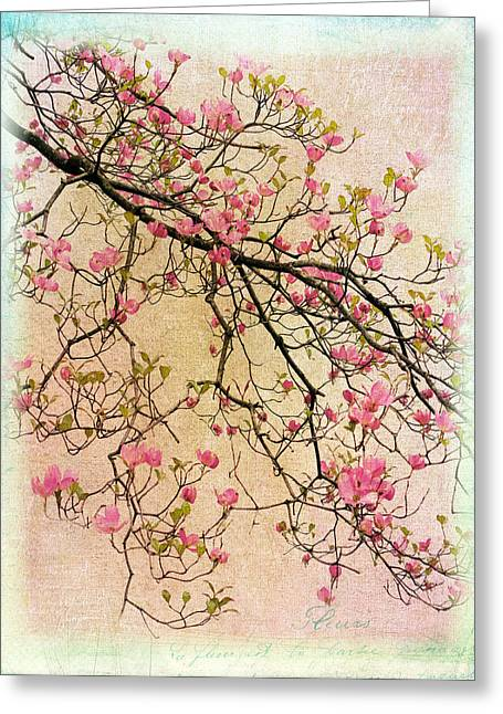 Dogwood Canvas 3 Greeting Card by Jessica Jenney