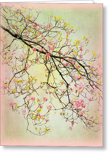 Dogwood Canvas 4 Greeting Card by Jessica Jenney