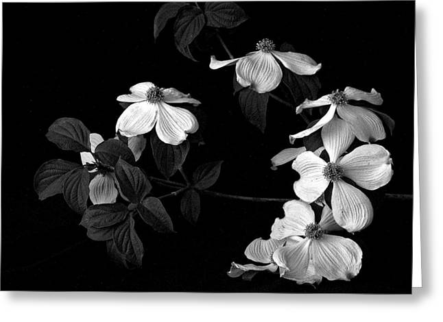 Dogwood Greeting Card