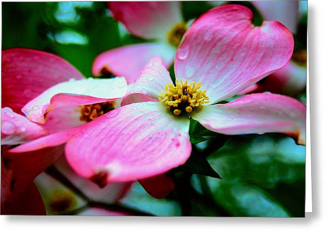 Dogwood Dew Greeting Card
