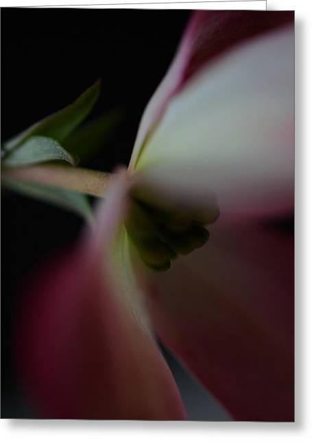 Dogwood Flower Greeting Card by Marianna Mills