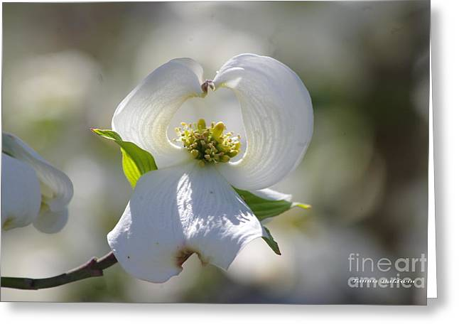 Greeting Card featuring the photograph Dogwood Flower by Tannis  Baldwin