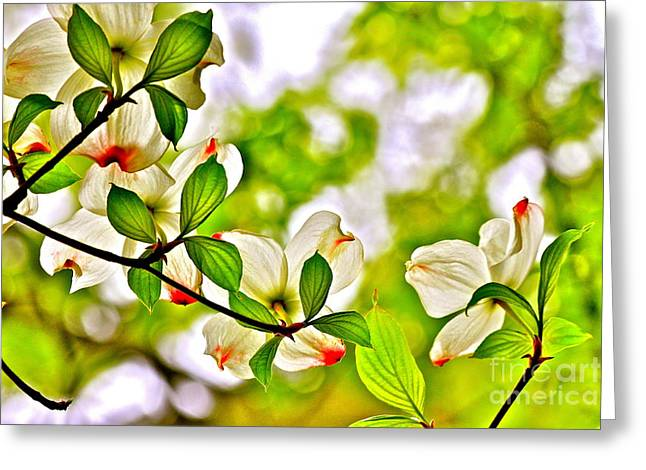 Dogwood Impressions I Greeting Card by Jay Nodianos