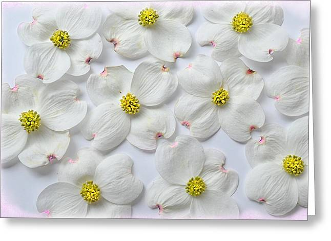Dogwood Season Number Three Greeting Card by Lena Wilhite